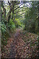 SX1291 : Track up the side of the Valency valley by Christopher Hilton