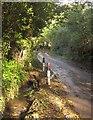 SX3361 : Molenick Lane by Derek Harper