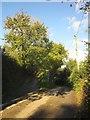 SX3361 : Lane junction, Tilland by Derek Harper