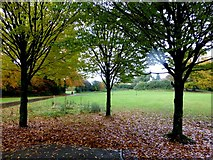 H4572 : Fallen leaves, Omagh by Kenneth  Allen