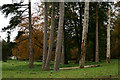 TQ2755 : Trees on White Hill, Chipstead by Peter Trimming