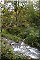 SX1191 : Confluence of stream with River Valency by Christopher Hilton