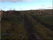 NJ3956 : Farm track near Ryeriggs by Steven Brown