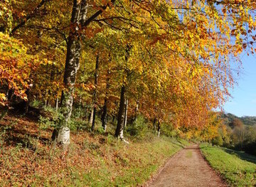 SO8101 : Autumn trees, Woodchester Park by Philip Halling
