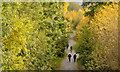 J3773 : Autumn, Comber Greenway, Belfast (2013) by Albert Bridge