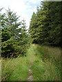 SN8257 : Forestry track  on Esgair Cloddiad, Powys by Roger  Kidd
