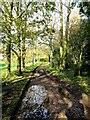 TQ6229 : Wadhurst Park Farm Service Track by Peter Skynner
