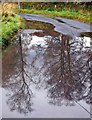 NY7789 : Road near Black Middens by Andrew Curtis