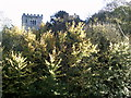 SP9001 : Church above the trees, Great Missenden by Peter S