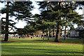 SP3165 : Cedars in the Pump Room Gardens by Robin Stott