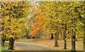 J3472 : Autumn trees, Ormeau Park, Belfast (1 in 2013) by Albert Bridge