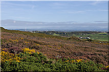 SH2181 : Gorse and Heather by Ian Capper