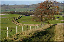 SK2169 : Tree on track towards Monsal Trail by Peter Barr