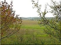 TQ2156 : Sloe and spindle along bridleway 33 by Hugh Craddock