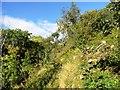 NZ4345 : Path in Hawthorn Dene by Robert Graham