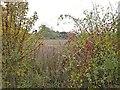 TQ2156 : Rosehips and black briony bushes by Hugh Craddock