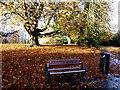 H4573 : Fallen leaves, Grange Park, Omagh by Kenneth  Allen