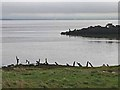 NY2462 : Solway Firth at Port Carlisle by Oliver Dixon