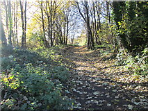 SE1421 : Woodland footpath - Toothill Bank by Betty Longbottom