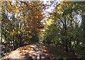 TM2561 : Footpath to Hillhouse Farm & Kettleburgh Lodge by Adrian Cable