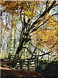 SK2764 : Autumn in Sitch Plantation (I) by Neil Theasby