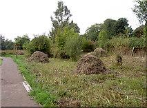 ST8744 : Smallbrook reserve by Neil Owen