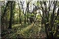 SJ3663 : Bretton Wood by Jeff Buck