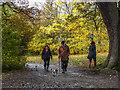 TQ2897 : Dog Walking in Trent Park by Christine Matthews