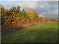 TQ5689 : Autumn colours in Pages Wood by Roger Jones