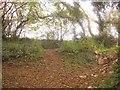 SX8559 : Green lanes meet near Aish by Derek Harper