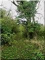 NY0933 : Footpath entering woodland by Graham Robson