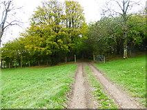 SU8216 : Footpath enters woodland below Monkton Farm by Shazz