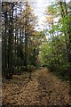 SK3476 : Path in Monk Wood by Graham Hogg