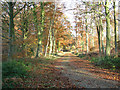 TG1522 : Footpath from Haveringland to Holt Road by Evelyn Simak