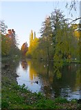 TQ2077 : The lake, Chiswick House Gardens, in November by Stefan Czapski