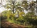 ST6879 : Community Forest Path near Parkgate Farm by Derek Harper
