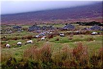 F6307 : Achill Island - Deserted Village - Grazing Sheep & Cottage Ruins by Joseph Mischyshyn