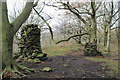 SK3098 : Woods at Gosling Moor by Dave Pickersgill