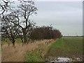 NZ1575 : Field boundary near Swallow Sike by Oliver Dixon