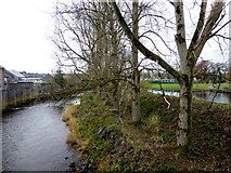 H4572 : Bare trees, Omagh by Kenneth  Allen