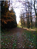 SU8113 : Path re-enters Wildham Wood by Shazz