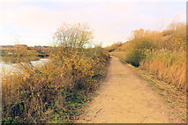 SP9314 : Track to the Octagon Hide, College Lake, after hedge cutting by Chris Reynolds
