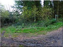 SU8213 : Track leaves bridleway in estate woodland by Shazz