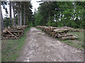 SU2307 : Timber by path by Hugh Venables