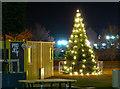 J5081 : Christmas Tree, Bangor by Rossographer