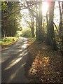 SY3596 : Champernhayes Lane by Derek Harper