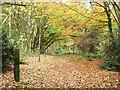 SU7724 : Woodland path by Robin Webster