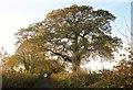 SY3396 : Oaks, Monkton Wyld Lane by Derek Harper