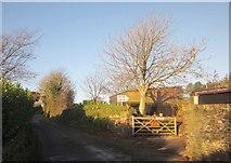 SX3358 : Lane at Trerulefoot by Derek Harper