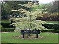 NY2623 : Tree and plaque, Hope Park, Keswick by Graham Robson